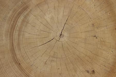 Sawn wood of large diameter.