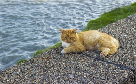 Red cat lying on the river bank. homeless animal. well-fed, contented cat is Napping on the embankment. holiday concept World Cat Day. initiative International Fund Animal Welfare. copy space.