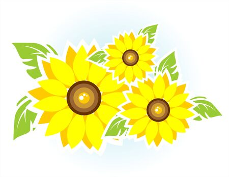 Composition from three sunflowers on a white background.