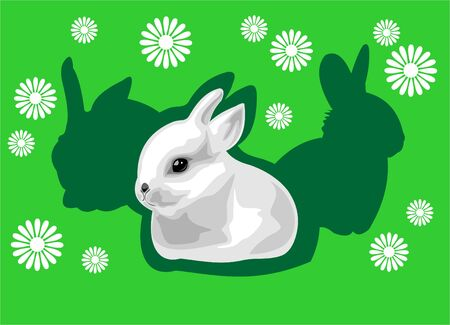 frisky: The white rabbit on a green background with flowers and a shadow.
