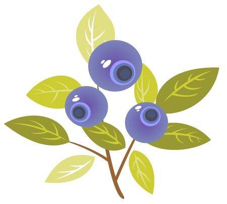 bilberry: Stylized bilberry isolated on a white background.