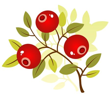 cranberries: Stylized cranberry isolated on a white background.