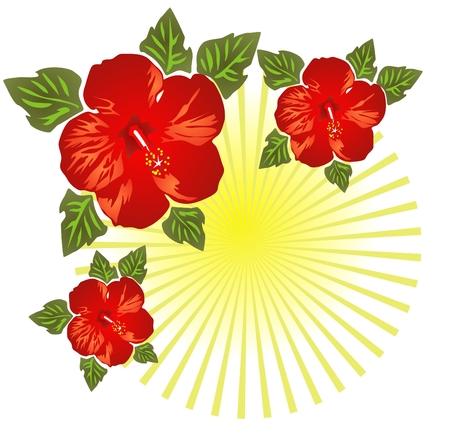 beautiful red hibiscus flower: Estilizados hibisco aislados en un fondo blanco con rayas.