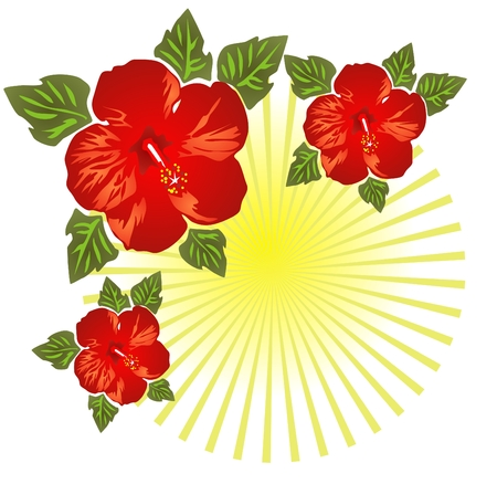 red hibiscus flower: Stylized hibiscus isolated on a white striped background.