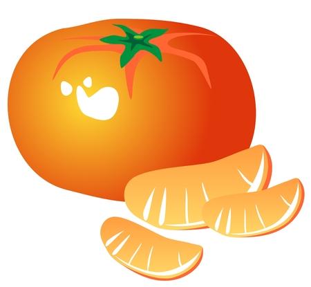 mandarin orange: Stylized tangerine and slices isolated on a white background. Illustration