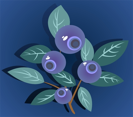 bilberry: Stylized bilberry isolated on a dark blue background.