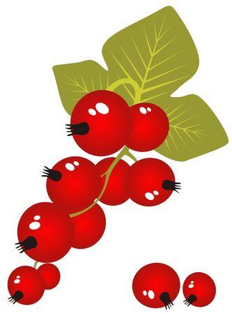 レッドカラント: 白い背景に分離した様式化された赤スグリ。