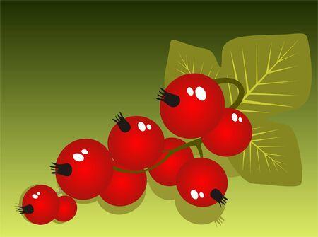 レッドカラント: 緑の背景に分離した様式化された赤スグリ。