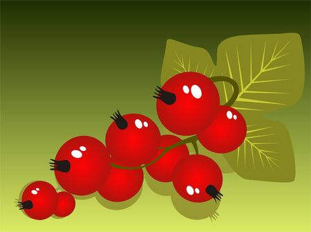 red currant: Stylized red currant isolated on a green background.