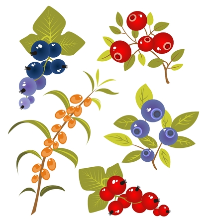 Stylized berries set isolated on a white background.