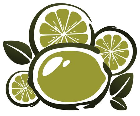 Stylized lime and slices isolated on a white background. Vector