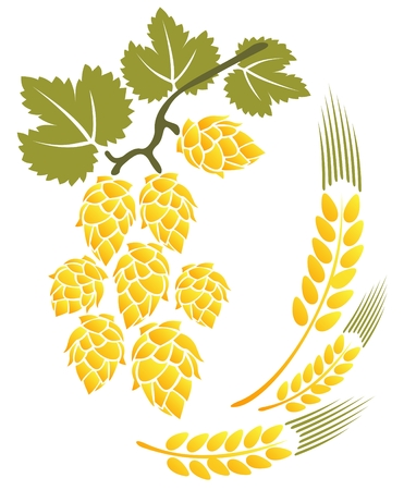 Stylized hop and wheat isolated on a white background. Illustration