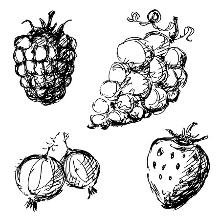 Four stylized fruit sketches isolated on a white background.