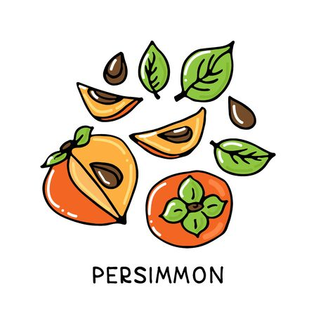 Persimmon fruit collection isolated on white background. Hand drawn style. Vector illustration. Design element for card, leaflet, booklet, poster, sticker.