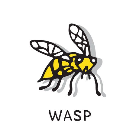 Hand drawn wasp isolated on white background. A stinging insect. Design elements for flyer, leaflet, sticker, booklet. Vector illustration.