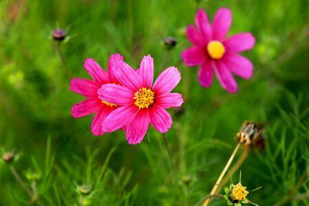 Flower  hanami