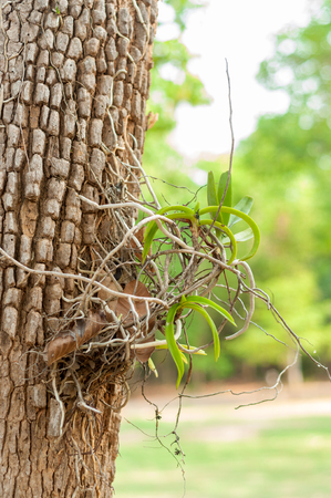 Wild orchids on trees  photo