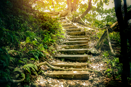 wood stairs made from concrete, walkway in hiking path to tourism in national park Stock Photo