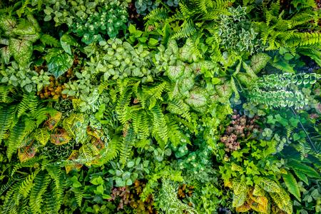 庭は垂直の壁にプラスチックの植物の背景