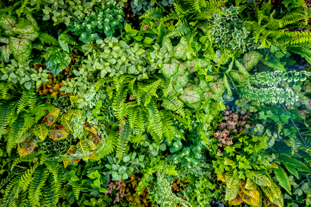 Achtergrond van plastic plant op de muur, verticale tuin Stockfoto - 79546453