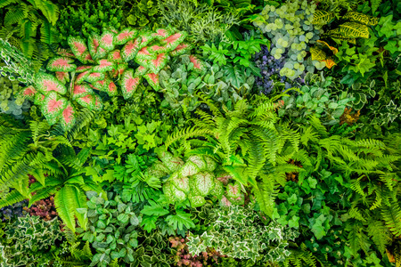 Background of plastic plant on wall, vertical garden