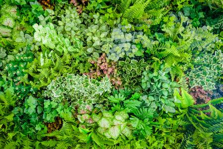 Fondo della pianta di plastica sulla parete, giardino verticale Archivio Fotografico