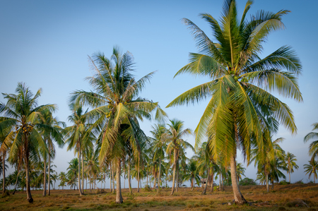 Coconut palm trees at side of tropical beach with blue sky