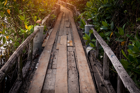 Wood walkway path over river and through tropical forest Zdjęcie Seryjne