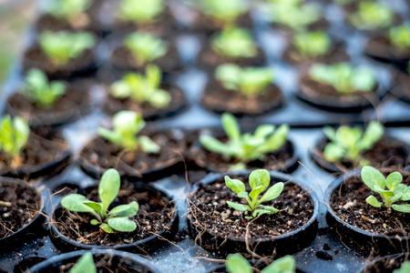 Plant seedlings growing on fertile soil with fertilizer , baby plant Seedlings sprout.