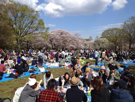 Hanami hordes.Peak season at Yoyogi Park in Tokyo Stock Photo