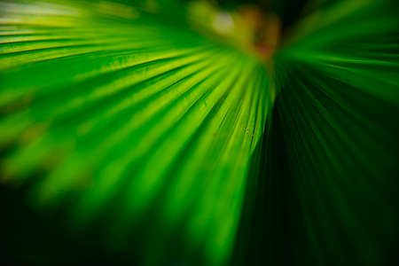 Tropical green leaf in spring daytime closeup Banque d'images