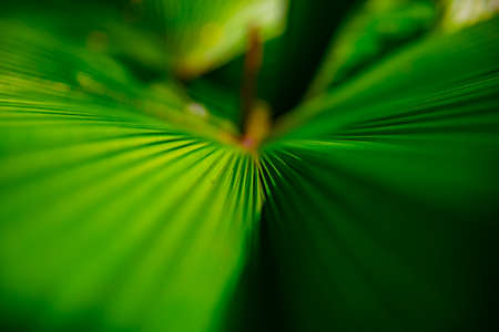 Tropical green leaf in spring daytime closeup Banque d'images - 157550839