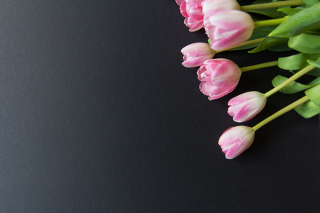 background textures: Tulips on a black wooden background , textures