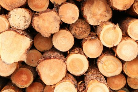Sawn logs of trees piled on the ground as a symbol of environmental disaster Stockfoto