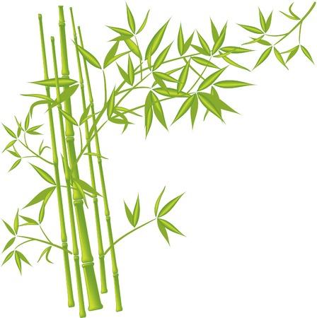 Bambú, ilustración vectorial  Foto de archivo - 3434914