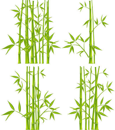 Bamboo, vector illustration (mesh)