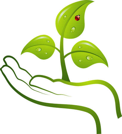 insect on leaf: Green life in hand, vector illustration Illustration