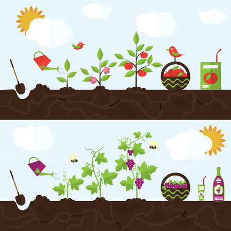 Vector garden illustration in flat style. Planting apple trees, harvesting, processing apples into juice. Planting grapes, harvesting, processing grapes into juice and wine. Vettoriali