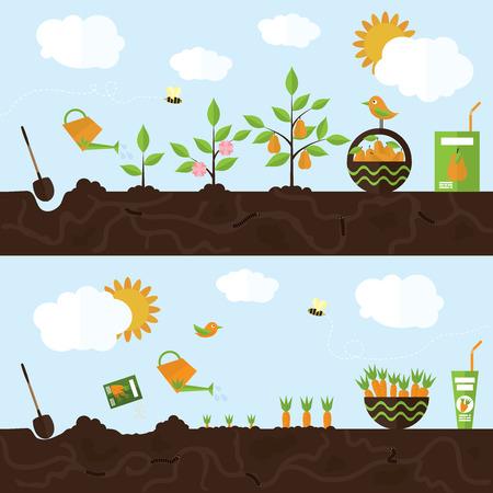 Vector tuin illustratie in vlakke stijl. Het planten van perenbomen, oogst, verwerking peren tot sap. Het planten wortelen, oogst, verwerking wortelen tot sap.