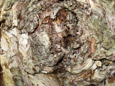 knothole: Closeup of tree burl