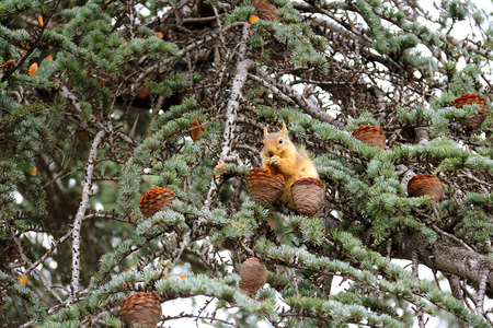 Squirrel Eating a Nut on a Tree photo