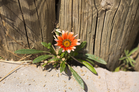 emphasis: Flush of orange colored flowers closeup through curbstone, environmental emphasis Stock Photo