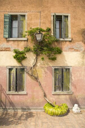 squiggles: Green colored ivy trees squiggles on the wall of an old house with wooden old window Stock Photo