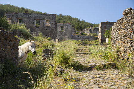 karmylassos: White horse looking at camera in a ghost town village Kayakoy ruins near Fethiye in Turkey
