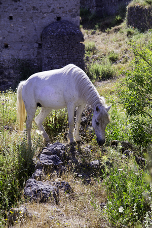 karmylassos: White horse grazing in the meadow near ghost town village Kayakoy ruins near Fethiye in Turkey Stock Photo