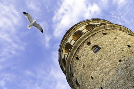 Flying seagull near the Galata Tower is a medieval stone tower in the Galata Standard-Bild