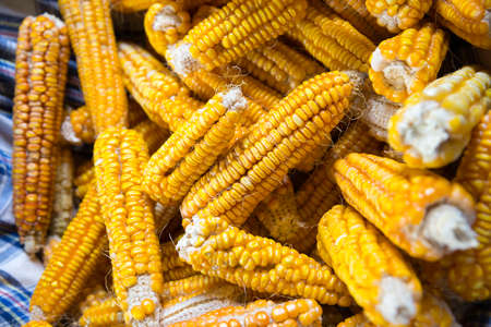 Yellow colored organic raw corn cobs in a basket. Textured effect with yellow corn kernels in cobs