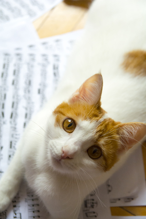 sheet music: Cat on the music sheet.