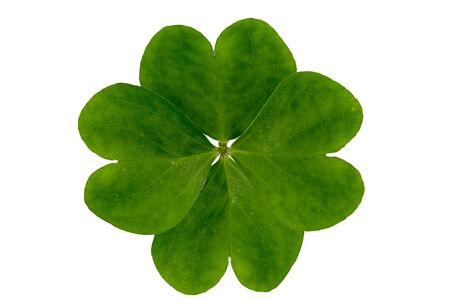 fourleaved: very vibrant four-leaved clover on a white background