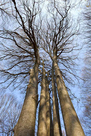 directly below: Bare trees directly from below. Stock Photo